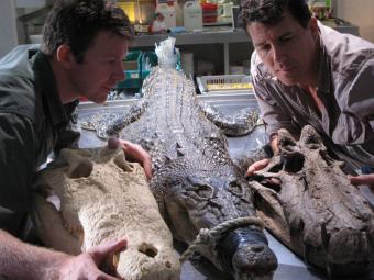 Los cocodrilos habitaron el Sáhara hace 100 millones de años