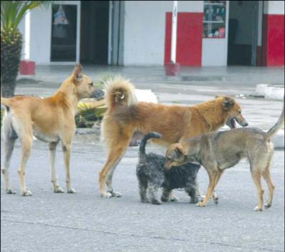 Fotos De Perros Callejeros
