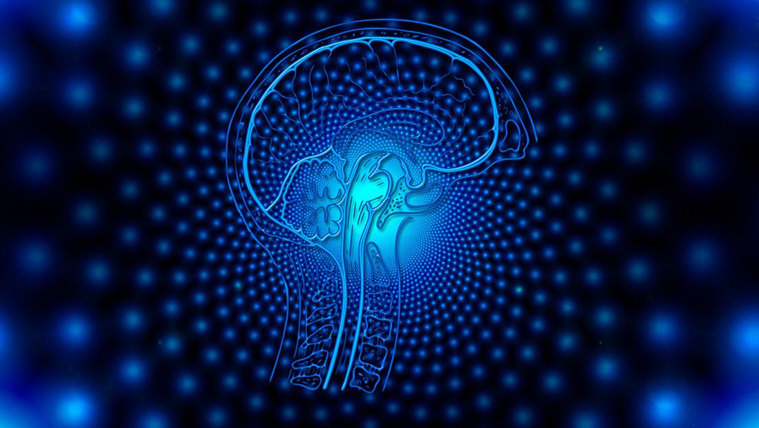 [Imagen: cerebro.jpg]